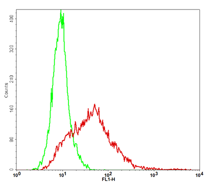 CD80 Stable Cell Line