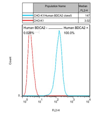 Recombinant BDCA2 Stable Cell Line-Human(Currently Unavailable)