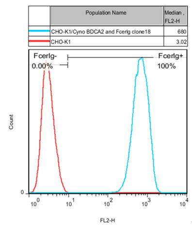 BDCA2 and FcER1G Stable Cell Line-CHO-K1-Cynomolgus