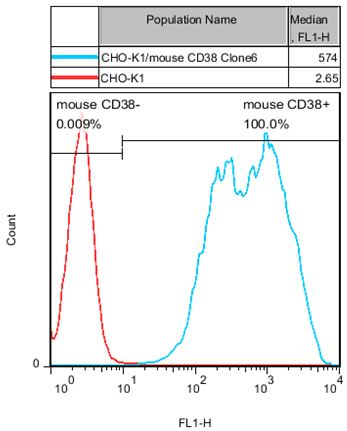 CD38 Stable Cell Line-CHO-K1-Mouse