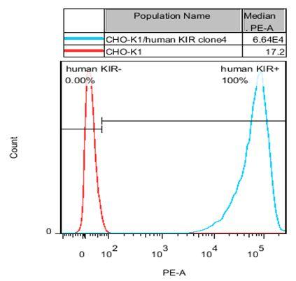 KIR Stable Cell Line-CHO-K1-Human