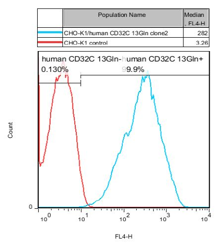 CD32C 13Gln Stable Cell Line-CHO-K1-Human(Currently Unavailable)