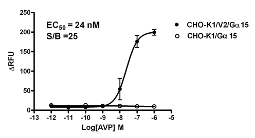 G alpha 15 Stable Cell Line-V2-CHO-K1-Human