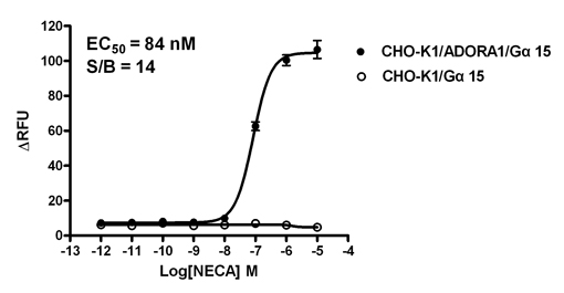 G alpha 15 Stable Cell Line-ADORA1-CHO-K1-Human(Currently Unavailable)