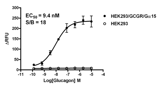 G alpha 15 Stable Cell Line-GCGR-HEK293-Human(Currently Unavailable)