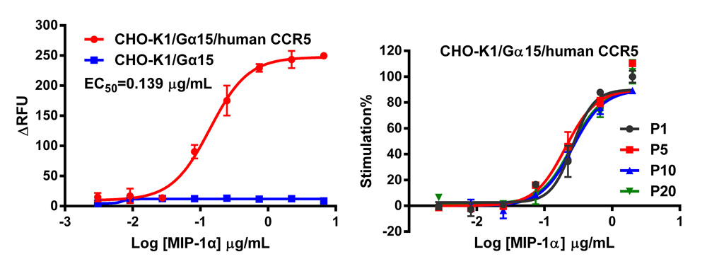 G alpha 15 Stable Cell Line-CCR5-CHO-K1-Human(Currently Unavailable)