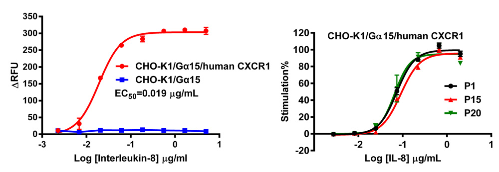 G alpha 15 Stable Cell Line-CXCR1-CHO-K1-Human