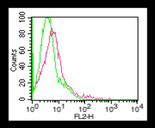 Anti-CD80 Monoclonal Antibody (Clone:16-10A1)