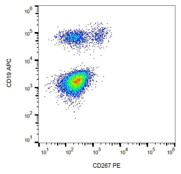 Anti-CD267 / TACI Monoclonal Antibody (Clone:1A1)-PE Conjugated