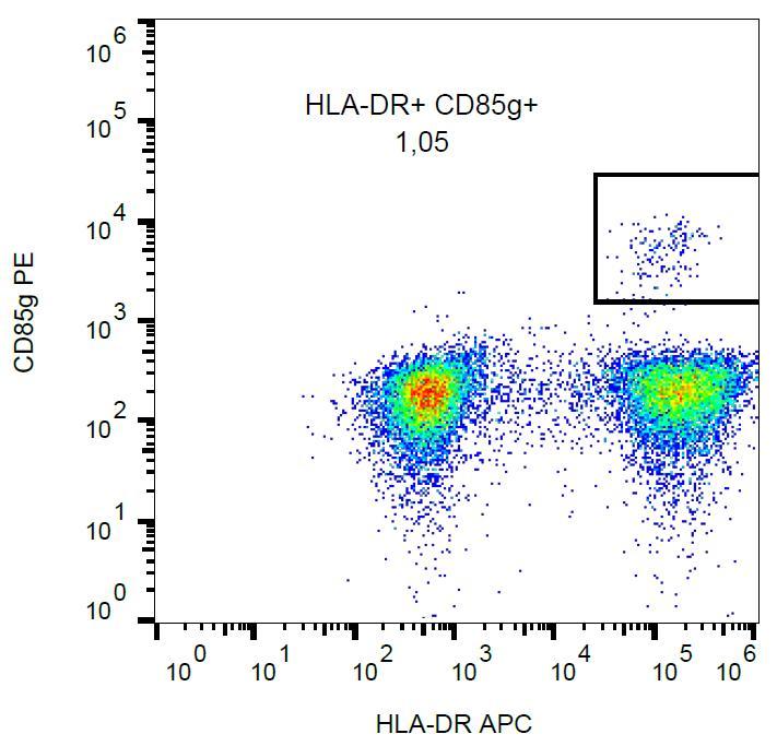 Anti-CD85g / ILT7 Monoclonal Antibody (Clone:17G10.2)-PE Conjugated