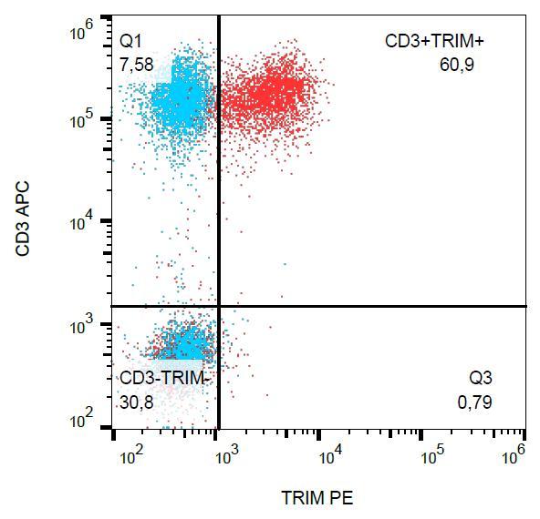 PE Conjugated Anti-TRIM / TRAT1 Monoclonal Antibody (Clone:TRIM-04)