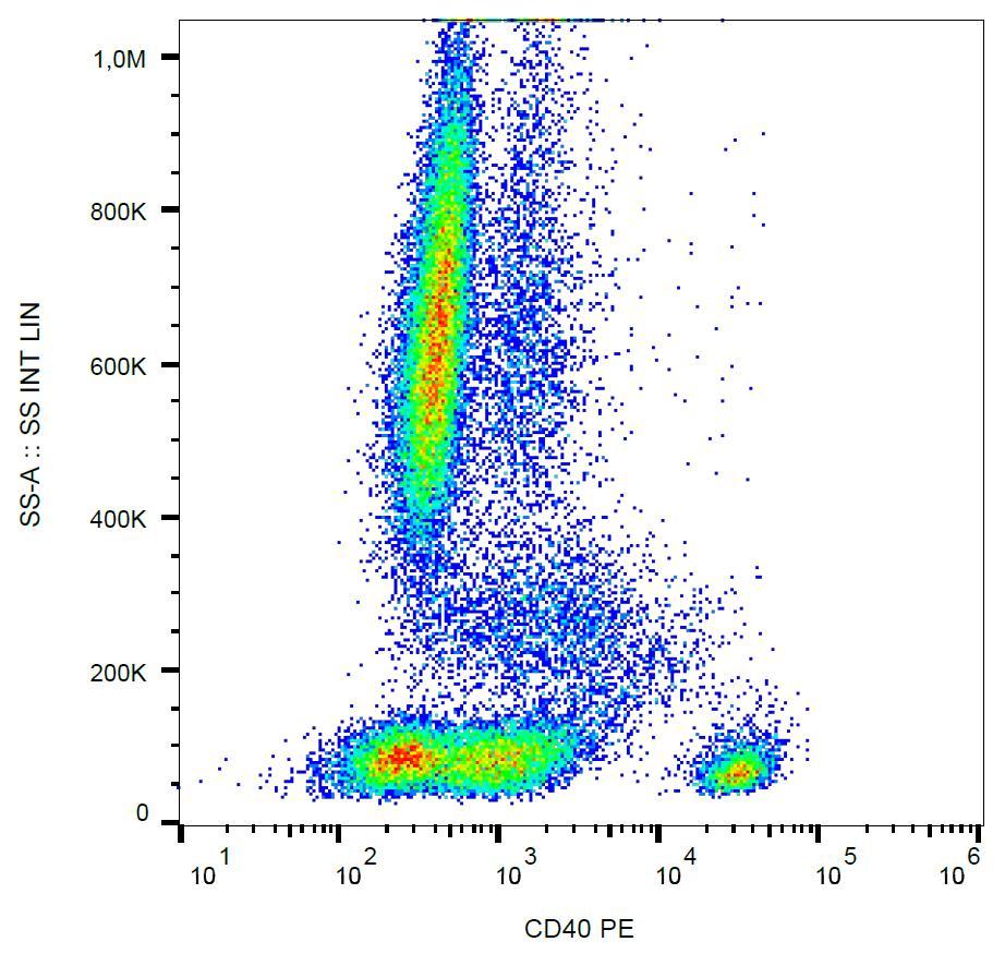 Anti-CD40 Monoclonal Antibody (Clone:HI40a)-PE Conjugated