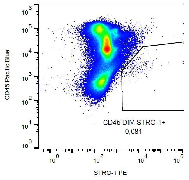 PE Conjugated Anti-STRO-1 Monoclonal Antibody (Clone:STRO-1)