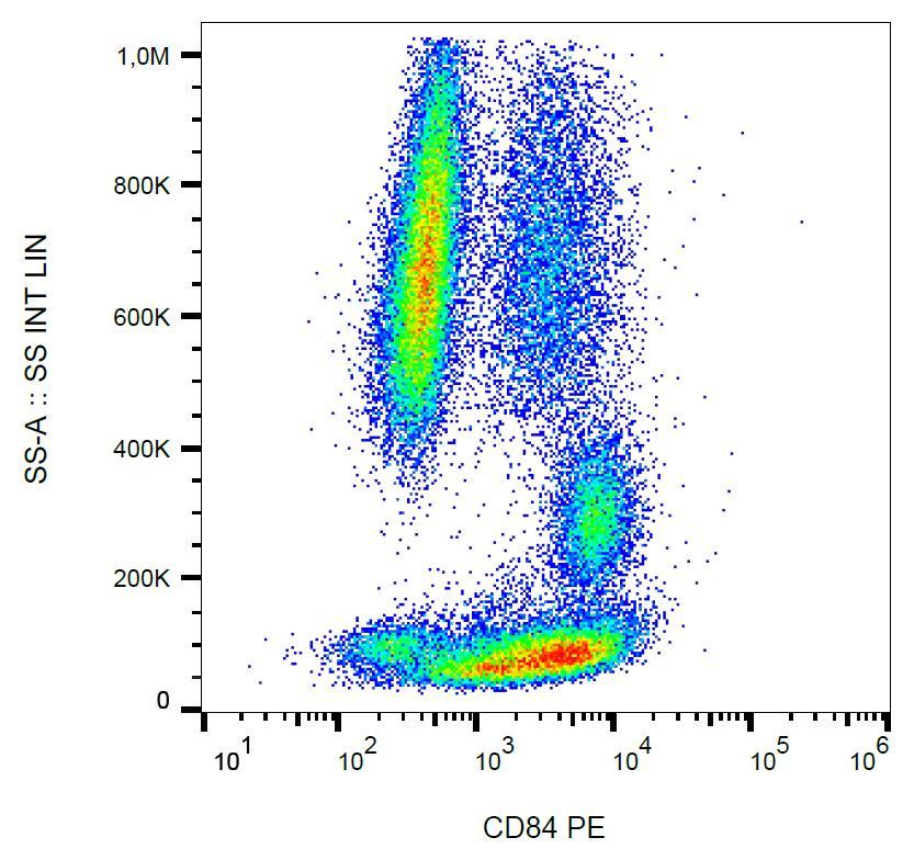 Anti-CD84 Monoclonal Antibody (Clone:CD84.1.21)-PE Conjugated
