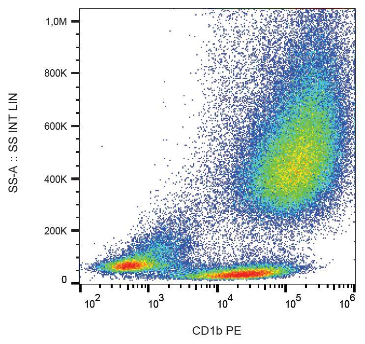 Anti-CD1b Monoclonal Antibody (Clone:SN13)-PE Conjugated