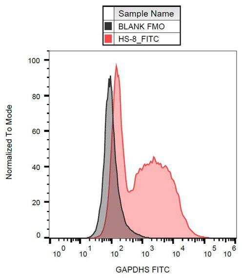 Anti-GAPDHS FITC (Clone : Hs-8)