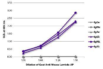 Goat Anti-Mouse Lambda-AP