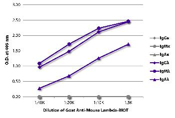 Goat Anti-Mouse Lambda-Biotin Conjugated
