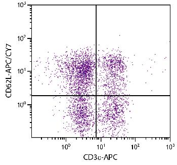 Rat Anti-Mouse CD62L-APC/CY7