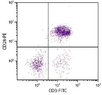 Mouse Anti-Chicken CD28-PE