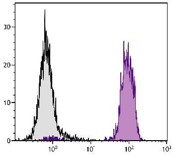 Mouse Anti-Chicken MHC Class I-Biotin Conjugated