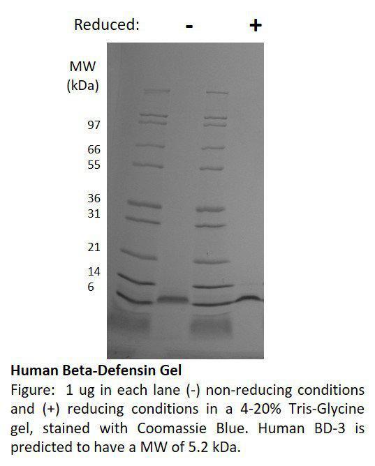 Human Beta Defensin-3