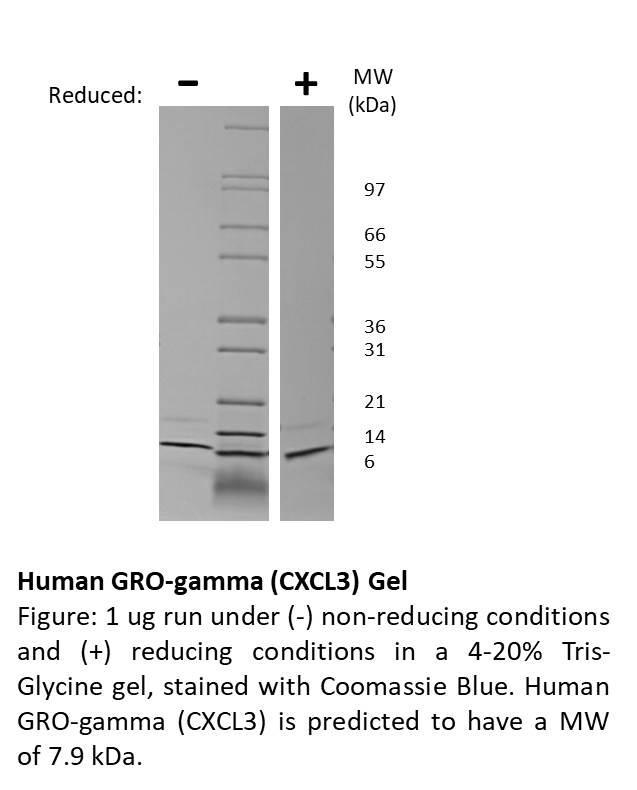 Human GRO-gamma (CXCL3)