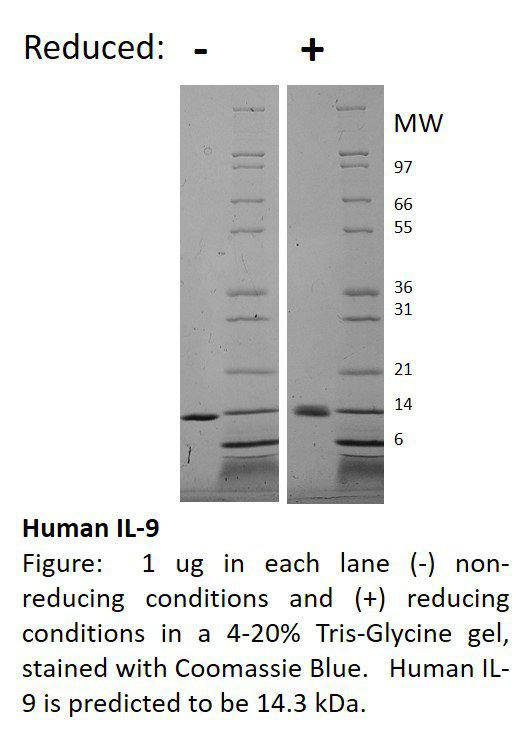 Human Interleukin-9