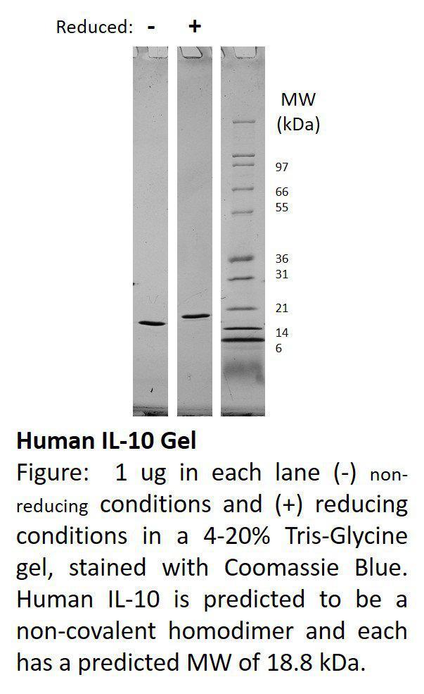 Human Interleukin-10 (AF)