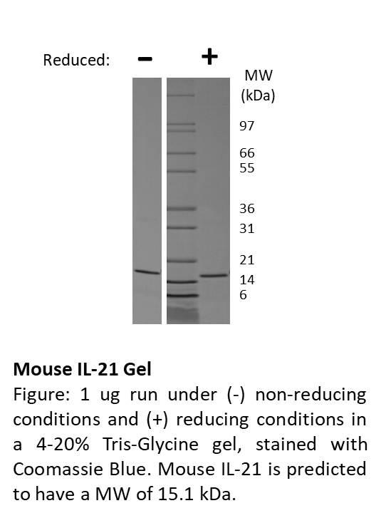 Mouse Interleukin-21