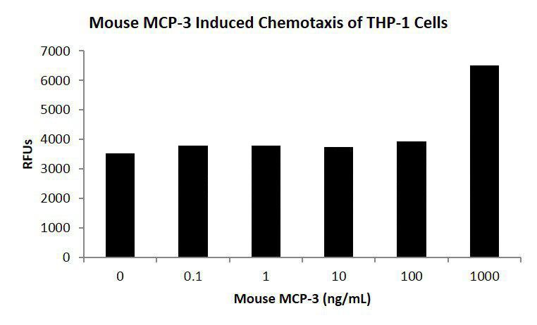 Mouse Monocyte Chemotactic Protein-3 (CCL7)