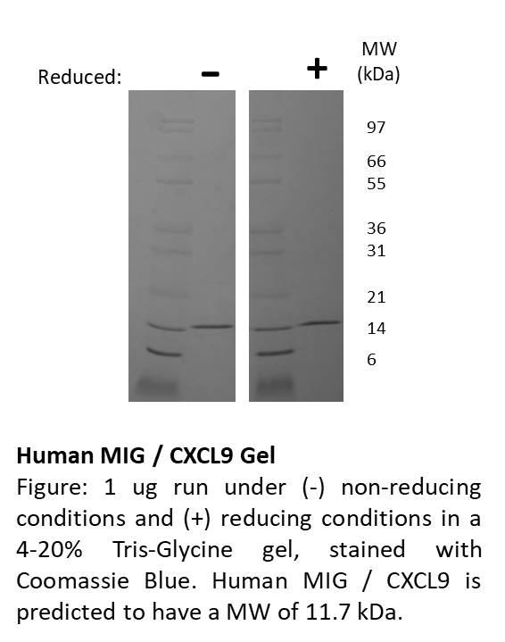 Human Monokine Induced by Gamma Interferon (CXCL9)