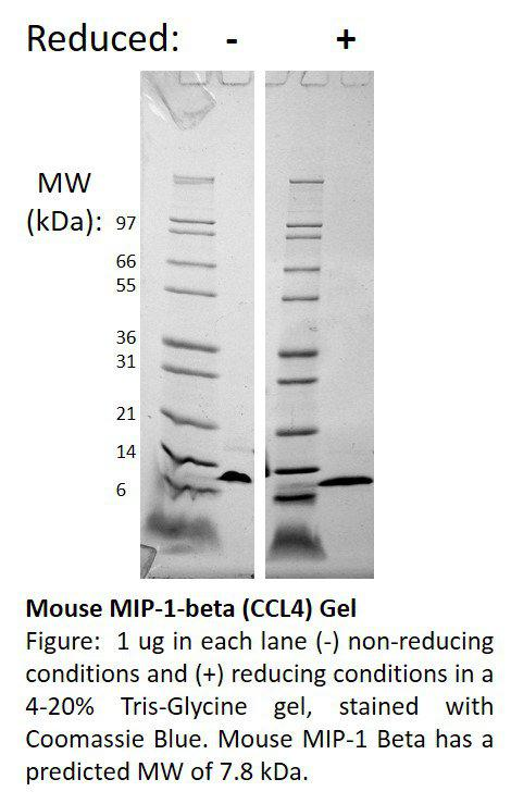 Mouse Macrophage Inflammatory Protein-1 beta (CCL4)