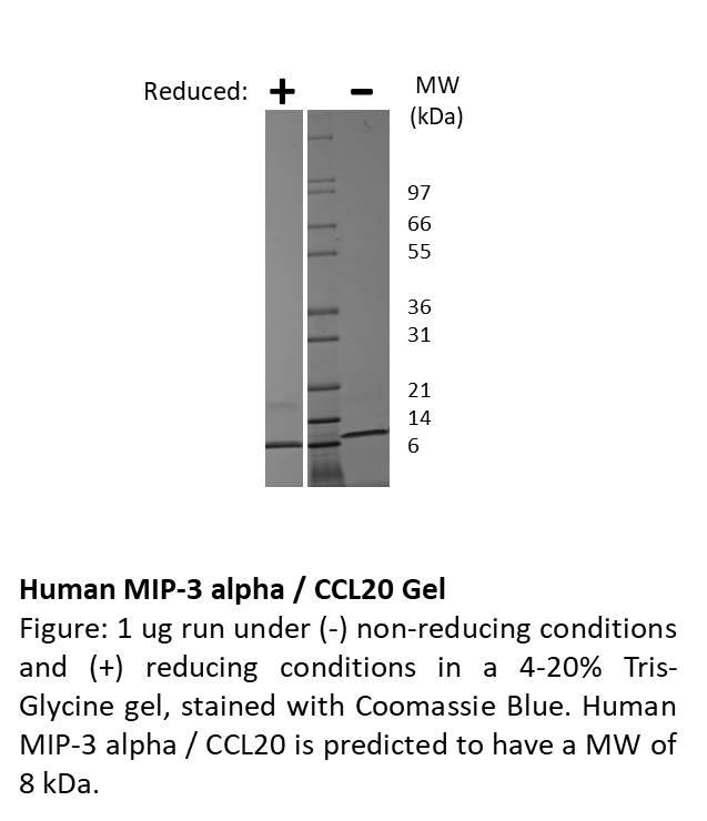 Human Macrophage Inflammatory Protein-3 alpha (CCL20)