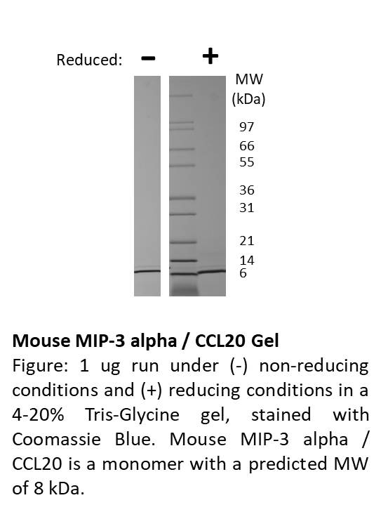 Mouse Macrophage Inflammatory Protein-3 alpha (CCL20)