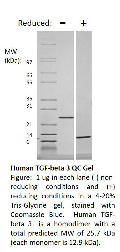 Mouse Transforming Growth Factor-beta 3