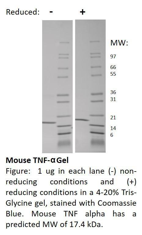 Mouse Tumor Necrosis Factor-alpha
