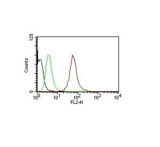 Monoclonal Antibody to Cytokeratin, pan (Epithelial Marker)(SPM115 + SPM116)-PE