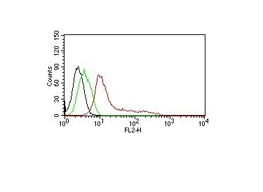 Monoclonal Antibody to Human Nuclear Antigen (HNA) (Human Cell Marker)(Clone : 235-1)