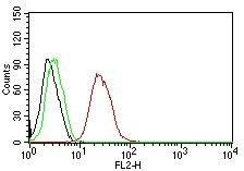 Monoclonal Antibody to ER-beta1 (Estrogen Receptor beta-1)(Clone : ERb455)