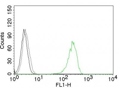 Monoclonal Antibody to CD71 / Transferrin Receptor (TFRC)(Clone : 66IG10)