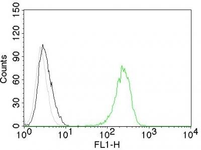 Monoclonal Antibody to CD71 / Transferrin Receptor (TFRC)(Clone : TFRC/1059)