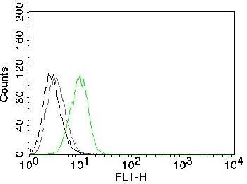 Anti-p27Kip1 (Mitotic Inhibitor/Suppressor Protein) Monoclonal Antibody (Clone: SX53G8)
