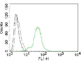 Anti-ER-beta-1 (Estrogen Receptor beta-1) Monoclonal Antibody(Clone: ERb455)-CF488