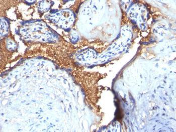 Anti-Glycophorin A / CD235a (Erythrocyte Marker) Polyclonal Antibody