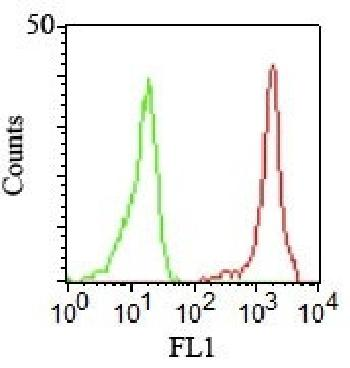 Anti-CD11a / Integrin L / LFA-1 Chain Monoclonal Antibody(Clone: CRIS-3)