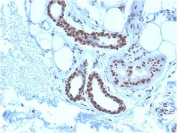 Anti-Nucleophosmin (Acute Myeloid Leukemia Marker) Monoclonal Antibody(Clone: NPM1/3285)