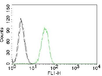 Anti-CD31 / PECAM-1 (Endothelial Cell Marker) Monoclonal Antibody(Clone: C31.7)-CF488