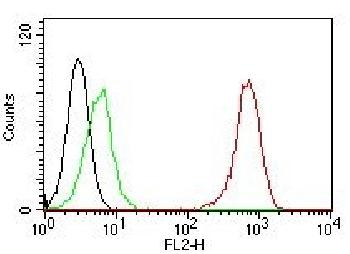 Anti-CD31 / PECAM-1 (Endothelial Cell Marker) Monoclonal Antibody(Clone: C31.7)