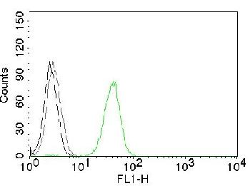 Anti-CD31 / PECAM-1 (Endothelial Cell Marker) Monoclonal Antibody(Clone: JC/70A)
